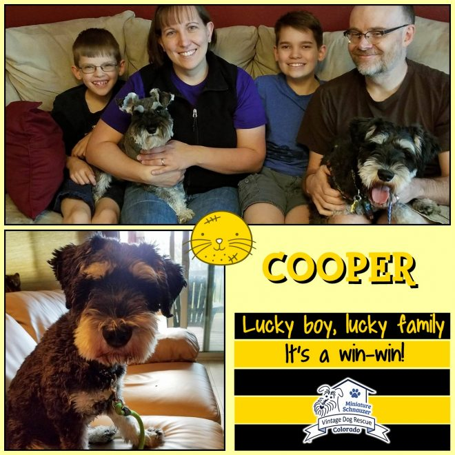 Cooper (Mini Schnauzer adopted)