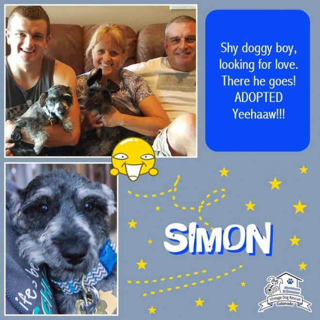 Simon (Mini Schnauzer adopted)