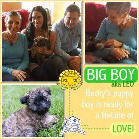 Big Boy (Terrier Mix) Adopted