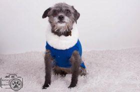 Lauren (Terrier mix for adoption)