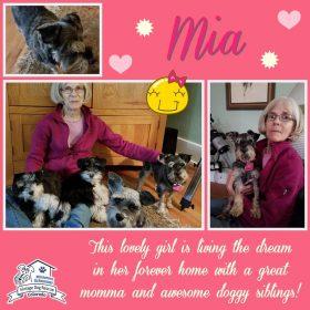 Mia (Mini Schnauzer) adopted
