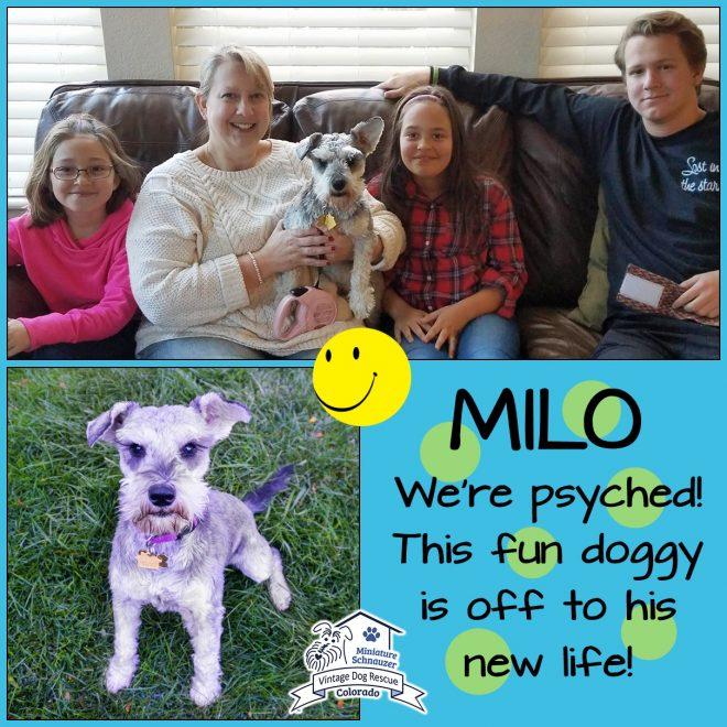 Milo (Mini Schnauzer adopted)