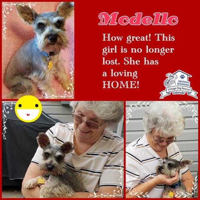 Modello (Mini Schnauzer) adopted