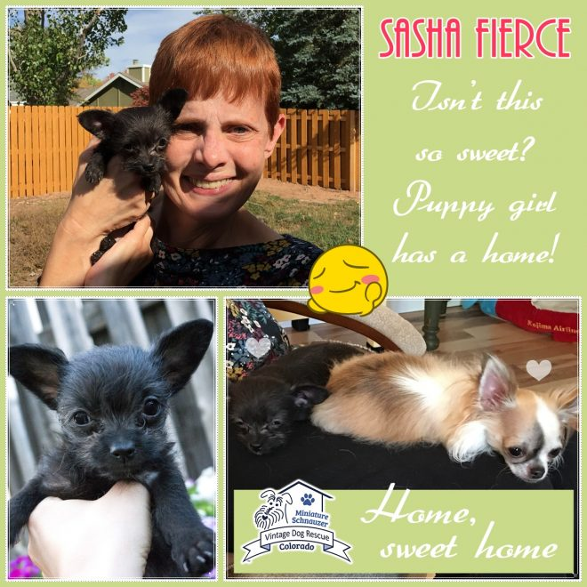 Sasha Fierce (Terrier Mix) Adopted