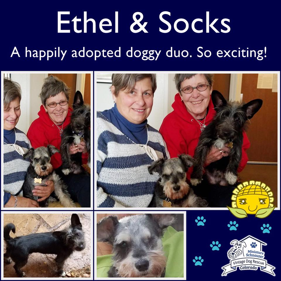 Ethel & Socks were adopted!
