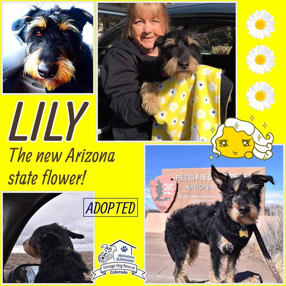 Lily was adopted!