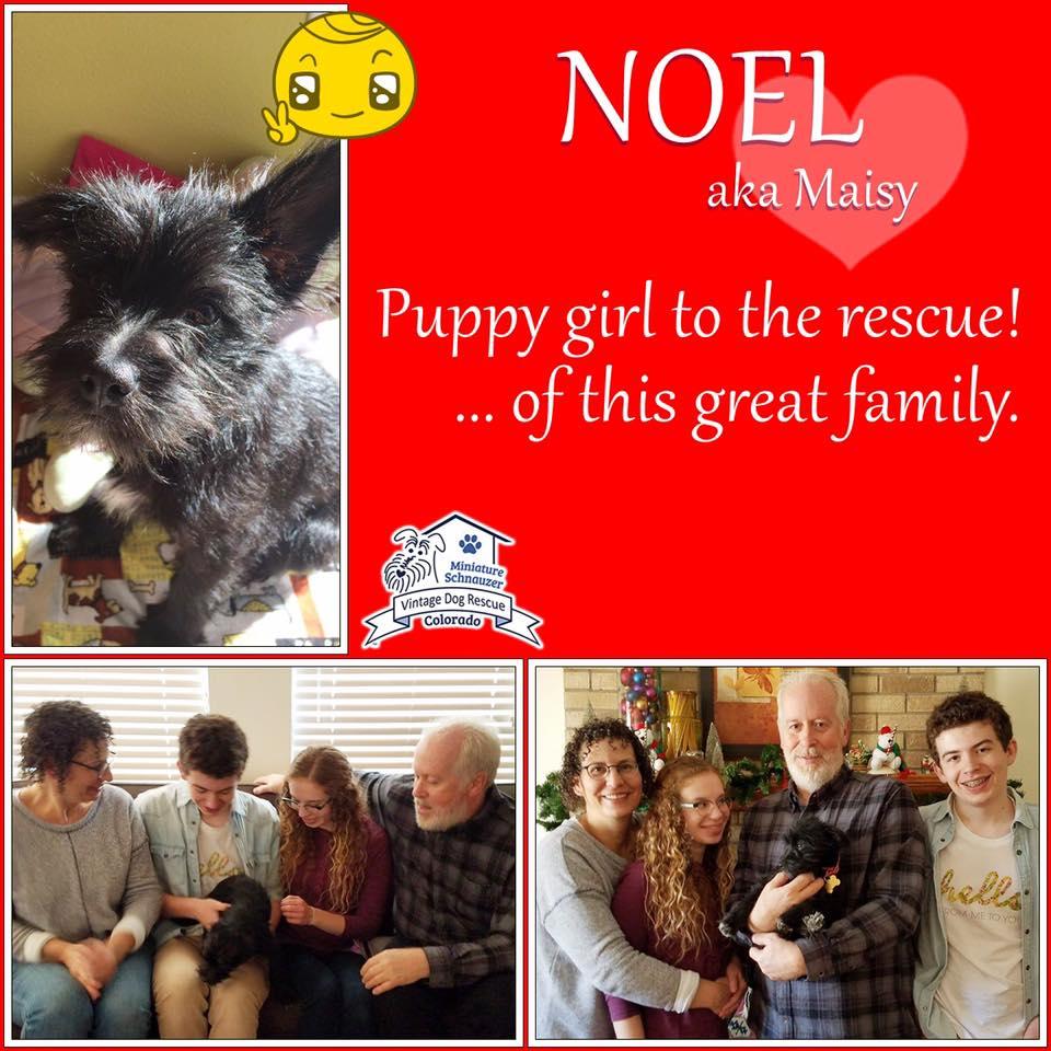 Noel was adopted!
