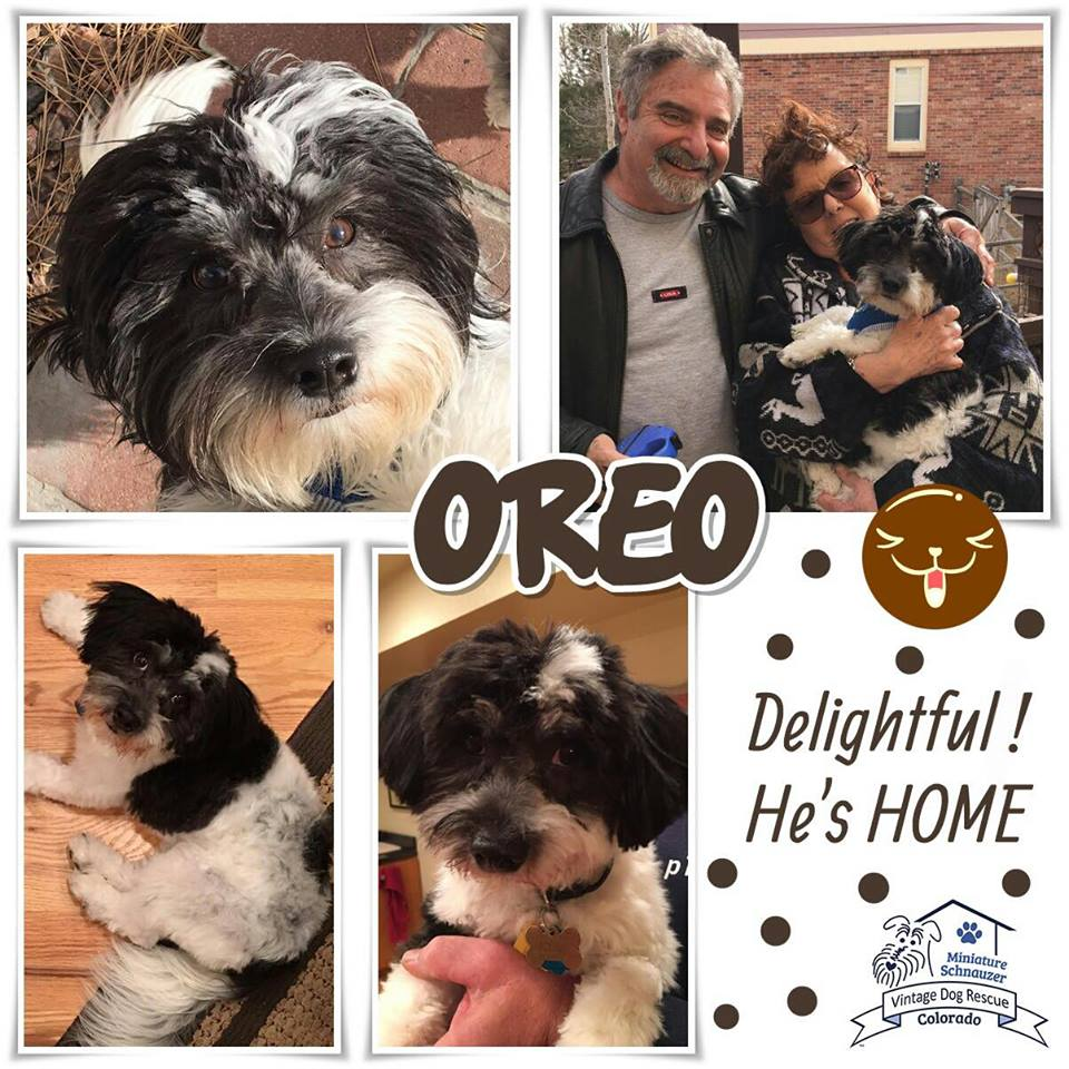 Oreo was adopted!