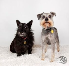 Daisy & Buddy (Cairn and Terrier for adoption)