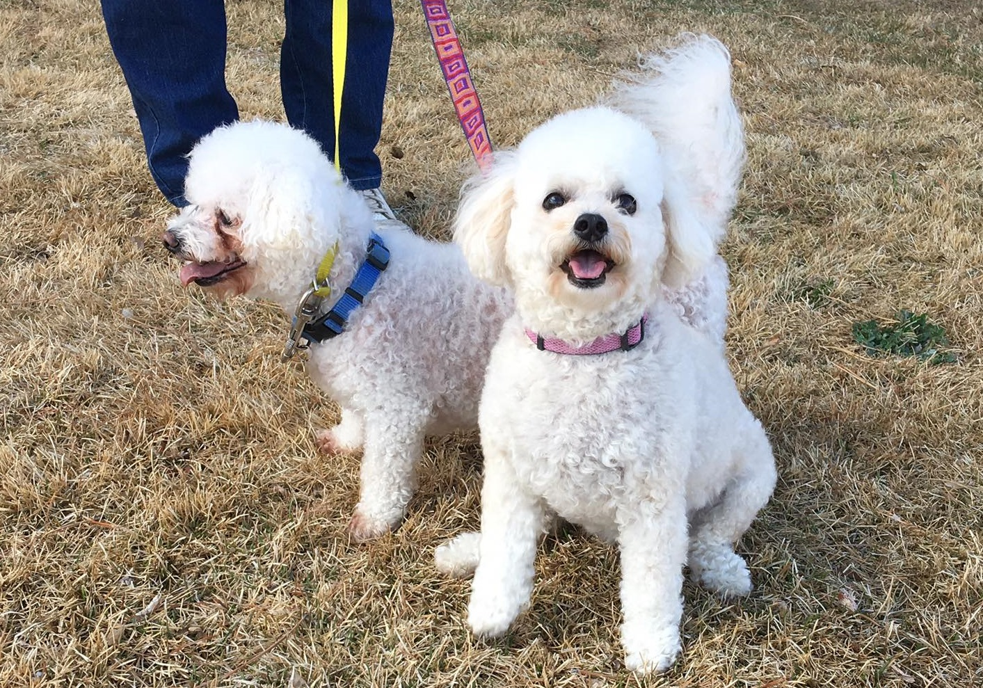 Adopt Mercedes & Maxwell: the cutest curly pair