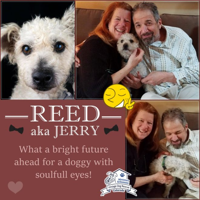 Reed (adopted dog)