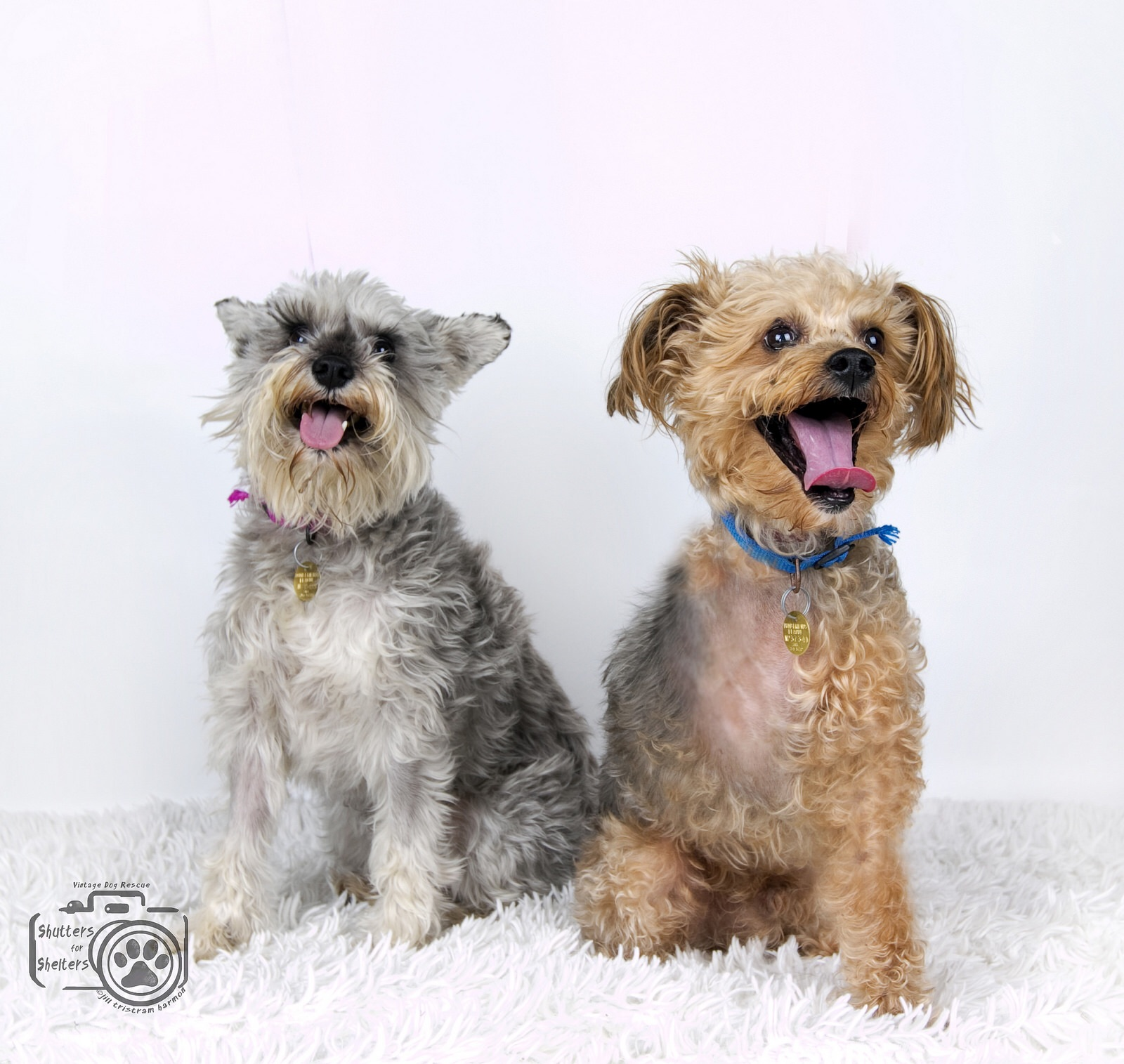 Adopt Tater & Tot: an adorable, bonded pair
