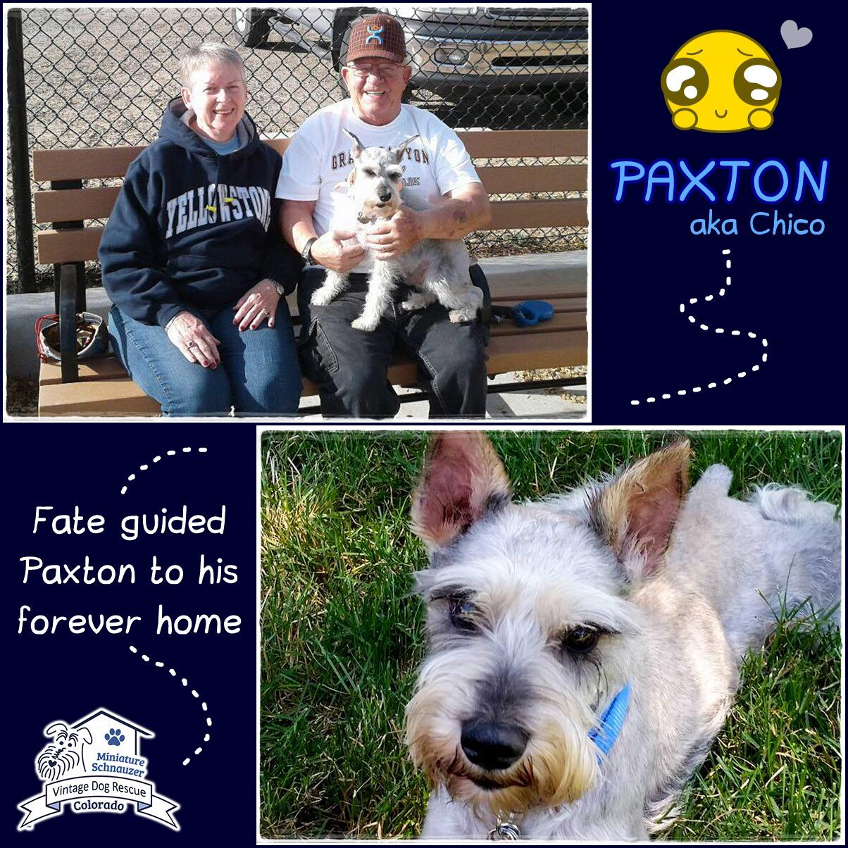 Paxton (Chico) was adopted!