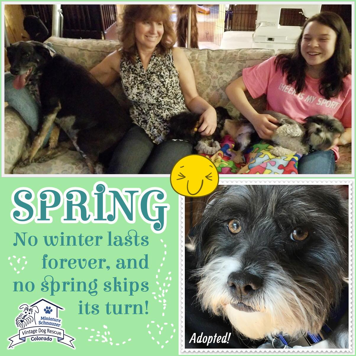 Spring was adopted!