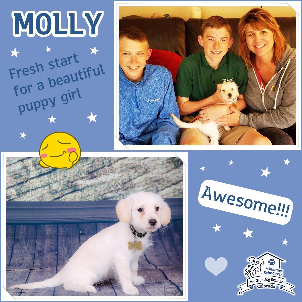 Molly was adopted!