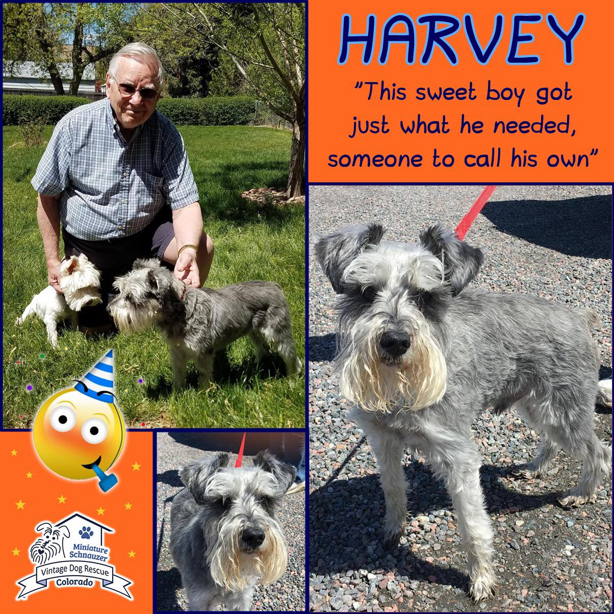 Harvey was adopted!