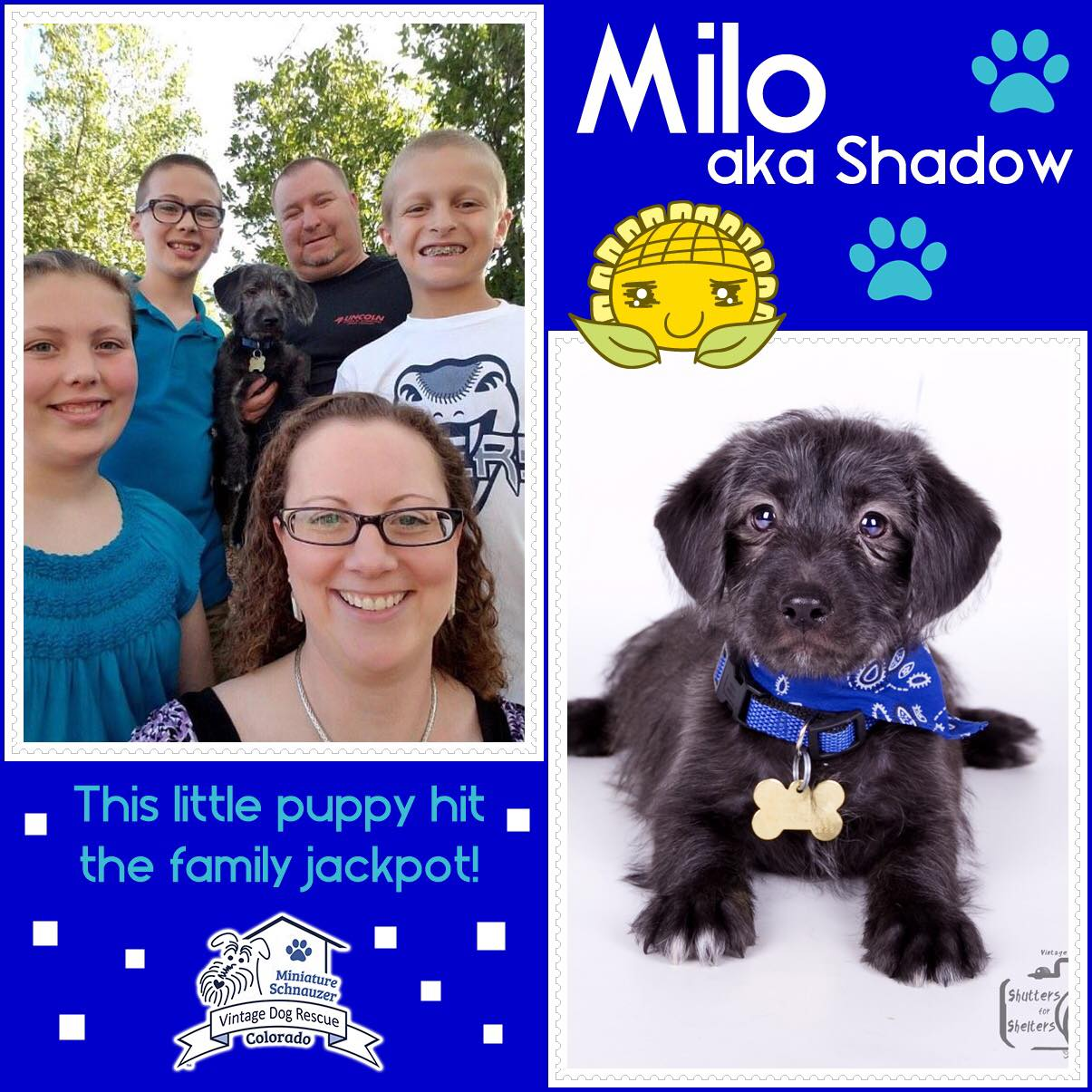 Milo was adopted!