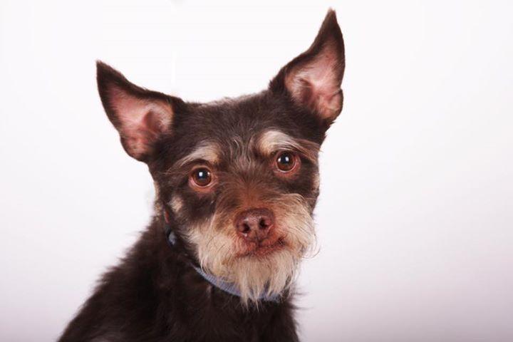 Adopt Bobby: a loving terrier