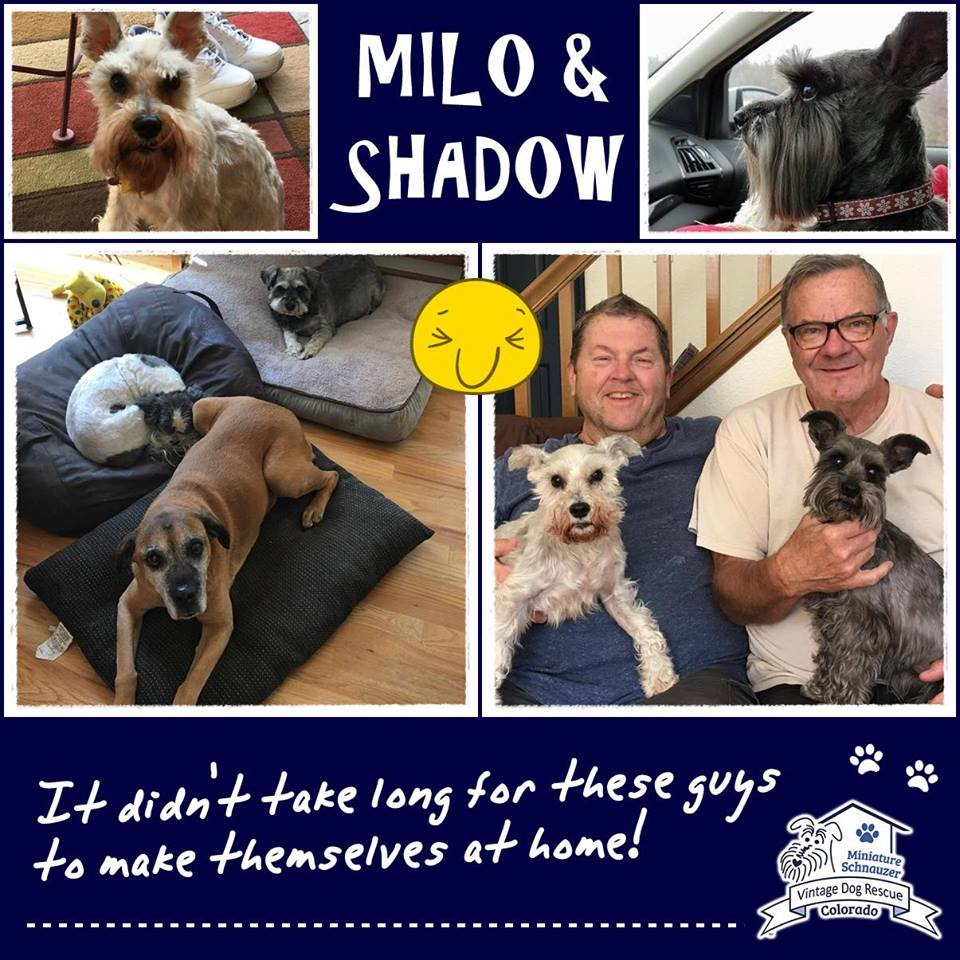 Milo & Shadow were adopted!
